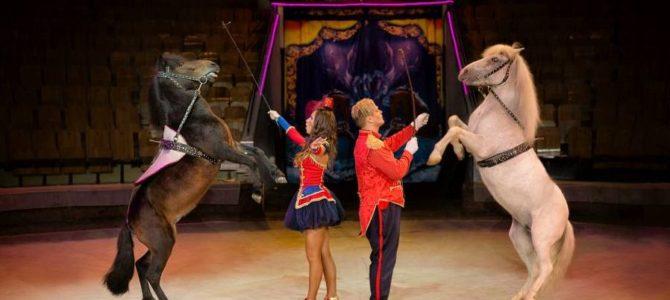 11 марта, посещение цирка вместе с организацией «Шаги детства»